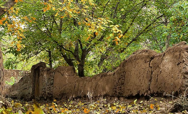 دیوار گلی و درخت