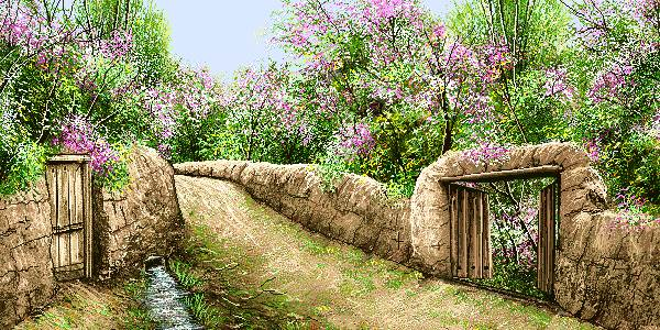 شکوفه بهاری درختان روستا