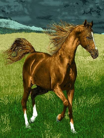 اسب در دشت