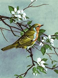 پرنده روی شاخه