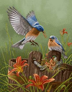 خانواده پرنده زیبا