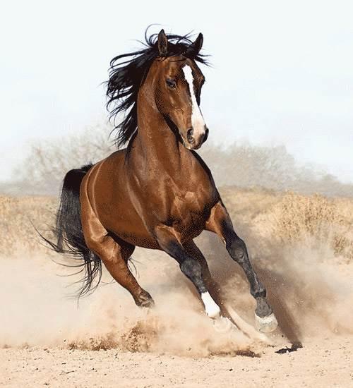 دویدن اسب قهوه ای