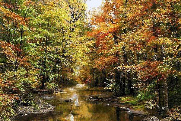 جنگل پاییزی 2