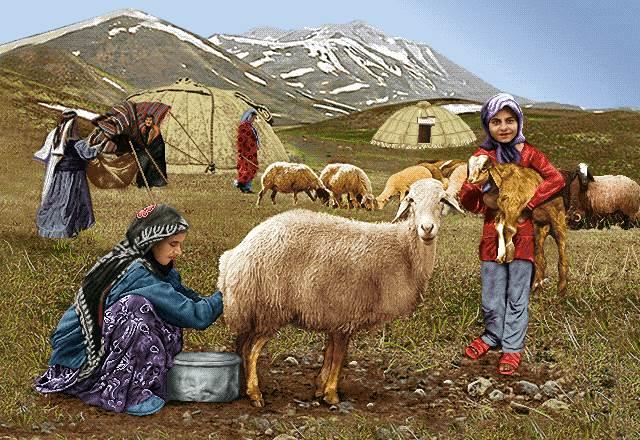 دوشیدن گوسفند عشایر