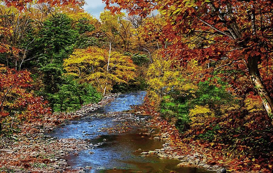 رود در جنگل پاییزی