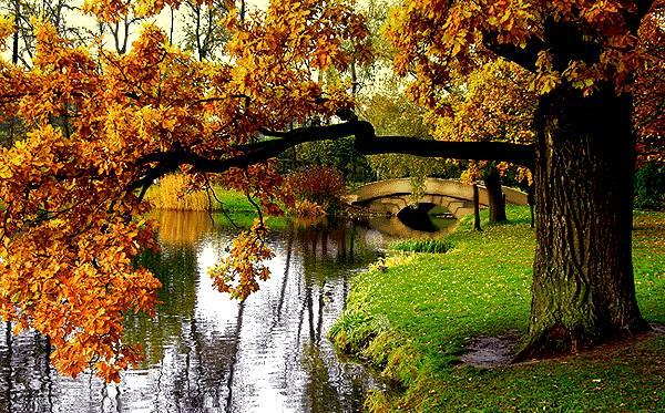 طبیعت پاییزی پارک جنگلی