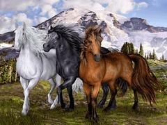 اسب سیاه سفید