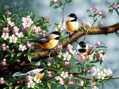 پرندگان بهاری