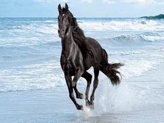 اسب سیاه در ساحل