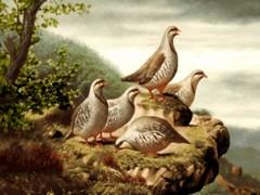 پرندگان کبک