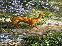 آهو در رود جنگلی