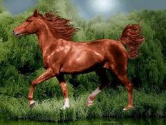 اسب قهوه ای
