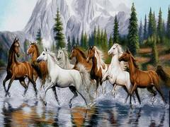 اسب های وحشی